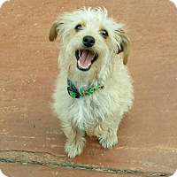 Adopt A Pet :: Gracie - Burbank, CA