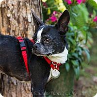 Adopt A Pet :: Deuce - Adoption Pending - Greensboro, NC