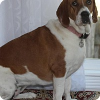 Adopt A Pet :: Piper (courtesy listing) - Brentwood, TN