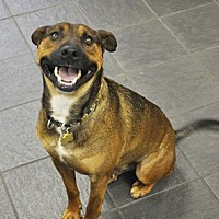Adopt A Pet :: Zorro - Woodburn, OR