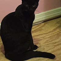 Adopt A Pet :: Shadow - Hazlet, NJ
