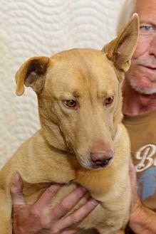 Adopt A Pet :: Miles Alirio, Stunning Hound  - Corona, CA