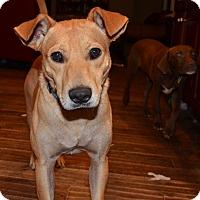 Adopt A Pet :: Ryder - Bedminster, NJ