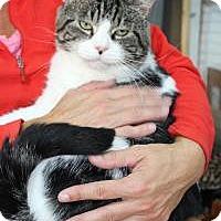 Adopt A Pet :: Pork Chop - Chambersburg, PA