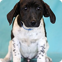 Adopt A Pet :: Eminem - Waldorf, MD