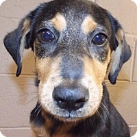 Adopt A Pet :: Magnum PI - Oxford, MS