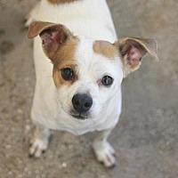 Adopt A Pet :: Gil - Redwood City, CA