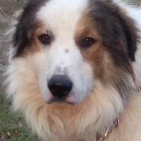 Adopt A Pet :: Fredrick - Andover, MA