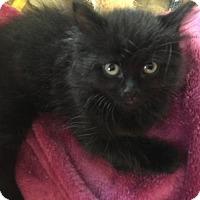 Adopt A Pet :: Zoe - Taylor, MI