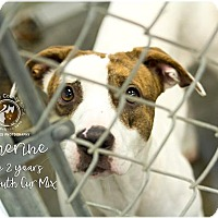 Adopt A Pet :: Catherine - Lancaster, PA