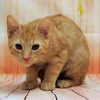 Adopt A Pet :: Bullseye - McDonough, GA