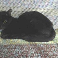 Adopt A Pet :: LEMON - Winter Haven, FL