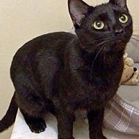 Adopt A Pet :: Misty - San Pedro, CA