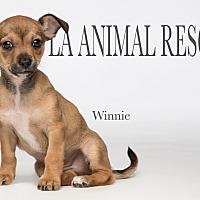 Adopt A Pet :: Winnie - Los Angeles, CA