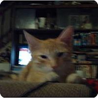 Adopt A Pet :: Tony - Hampton, CT