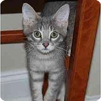 Adopt A Pet :: Edward - Woodstock, GA