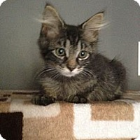 Adopt A Pet :: Jareau - Monroe, GA