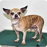Adopt A Pet :: Guiseppe - Port Washington, NY