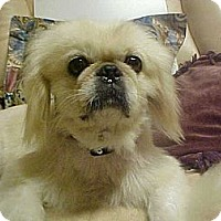 Adopt A Pet :: RAMSEY - Cathedral City, CA