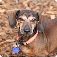 Adopt A Pet :: Spot - Ft. Myers, FL