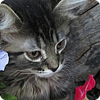 Adopt A Pet :: Magraw - Clearfield, UT