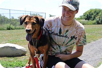 Beagle Mix Dog for adoption in Elyria, Ohio - Antony