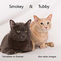 Adopt A Pet :: Tubby & Smokey - Arcadia, CA