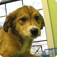 Adopt A Pet :: Baja - South Dennis, MA