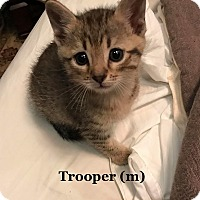 Adopt A Pet :: Trooper - Bentonville, AR