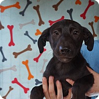 Adopt A Pet :: Geno - Oviedo, FL