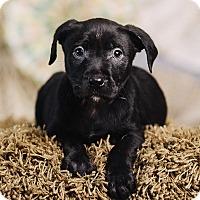 Adopt A Pet :: Mackerel - Portland, OR
