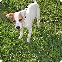 Adopt A Pet :: Brock - Leander, TX