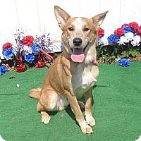 Adopt A Pet :: Peter - Sudbury, MA