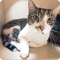 Adopt A Pet :: Sherman - Arlington/Ft Worth, TX