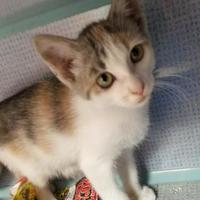Adopt A Pet :: Riptide - Manteo, NC