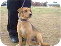 Terrier (Unknown Type, Medium) Mix Dog for adoption in Rochester, New Hampshire - Roscoe