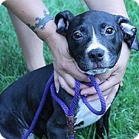 Adopt A Pet :: Bebe - South Jersey, NJ