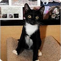 Adopt A Pet :: Calvin - Farmingdale, NY