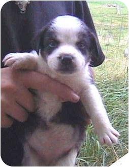 Husky Mix Puppy for adoption in Buffalo, New York - Tonya