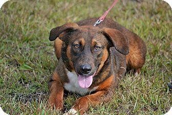 Labrador Retriever Mix Dog for adoption in Hazlehurst, Georgia - Nillie