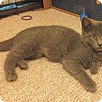 Adopt A Pet :: Aspen - East Brunswick, NJ