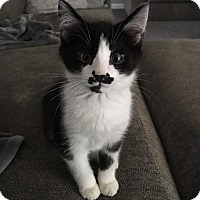 Adopt A Pet :: Groucho - Burlington, NC