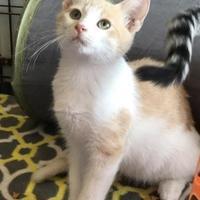 Adopt A Pet :: Dexter - Clarksdale, MS