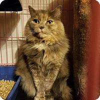 Adopt A Pet :: Marbella - Portland, ME