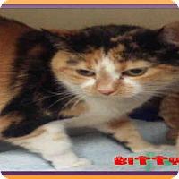 Adopt A Pet :: BITTY - Fort Walton Beach, FL