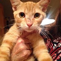 Adopt A Pet :: Dork - Oviedo, FL
