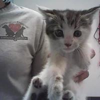 Adopt A Pet :: Gloria - Farmington, NM