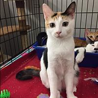 Adopt A Pet :: LOLA - Brea, CA