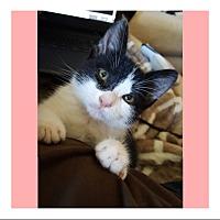 Adopt A Pet :: SYDNEY - Brea, CA