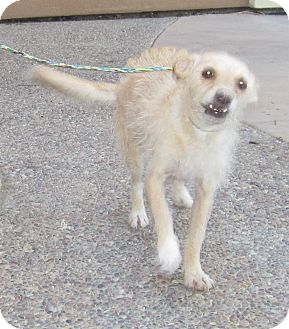 Terrier (Unknown Type, Medium) Mix Dog for adoption in Westminster, California - Jiminy